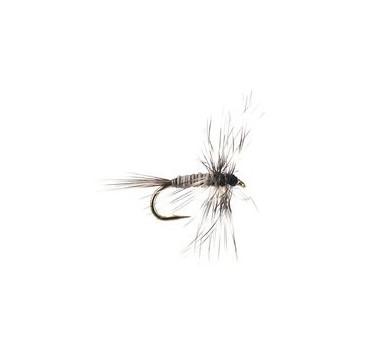 Mosquito Larva - 1